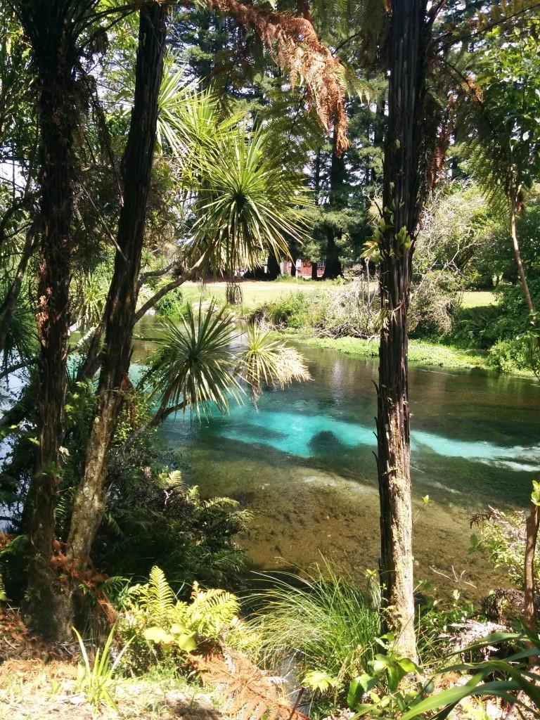 Ankunft bei der Hamurana-Quelle. Wieder einmal super klares blaues Wasser... und jede Menge Enten.