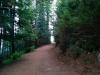 Durch den Wald gehts hoch...