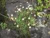 Beeindruckend, wie die selbe Pflanze (?) einmal weiß und einmal lila anmutet