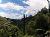 Dschungelpanorama! Mit Mount Maunganui im Hintergrund.