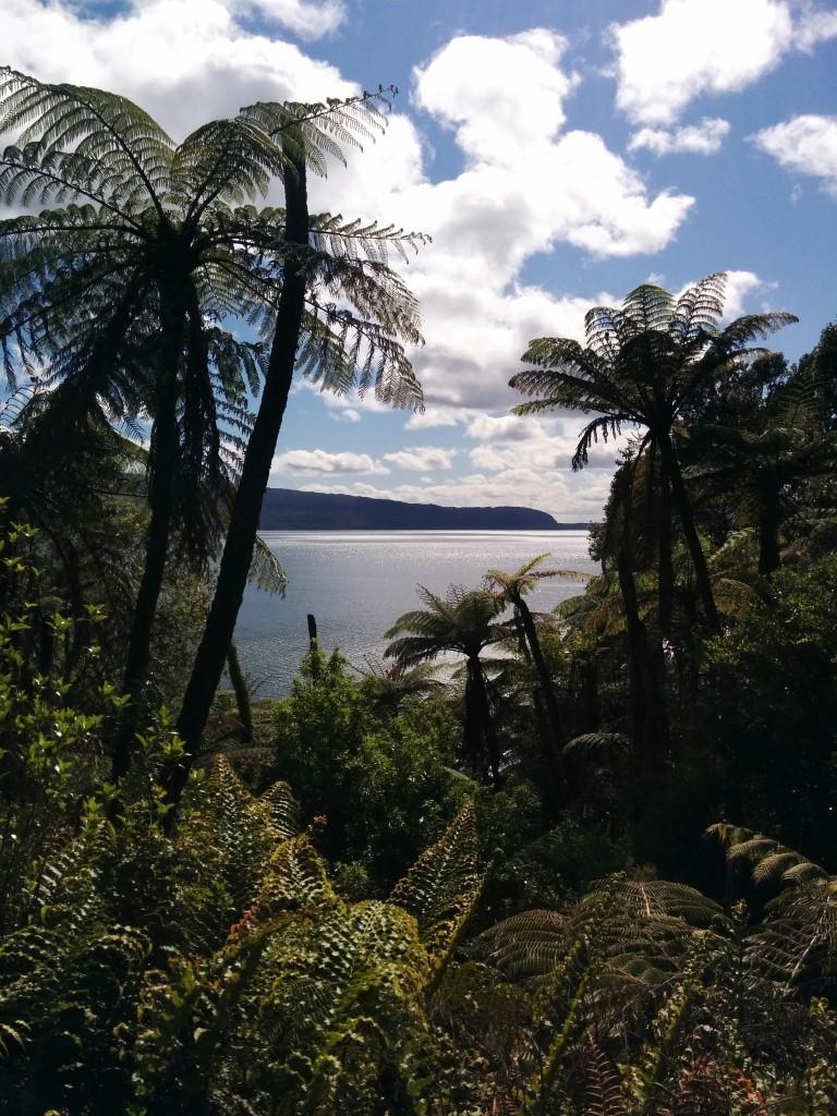 Ich hab es in den Bush geschafft. Überall diese tollen Palmen!