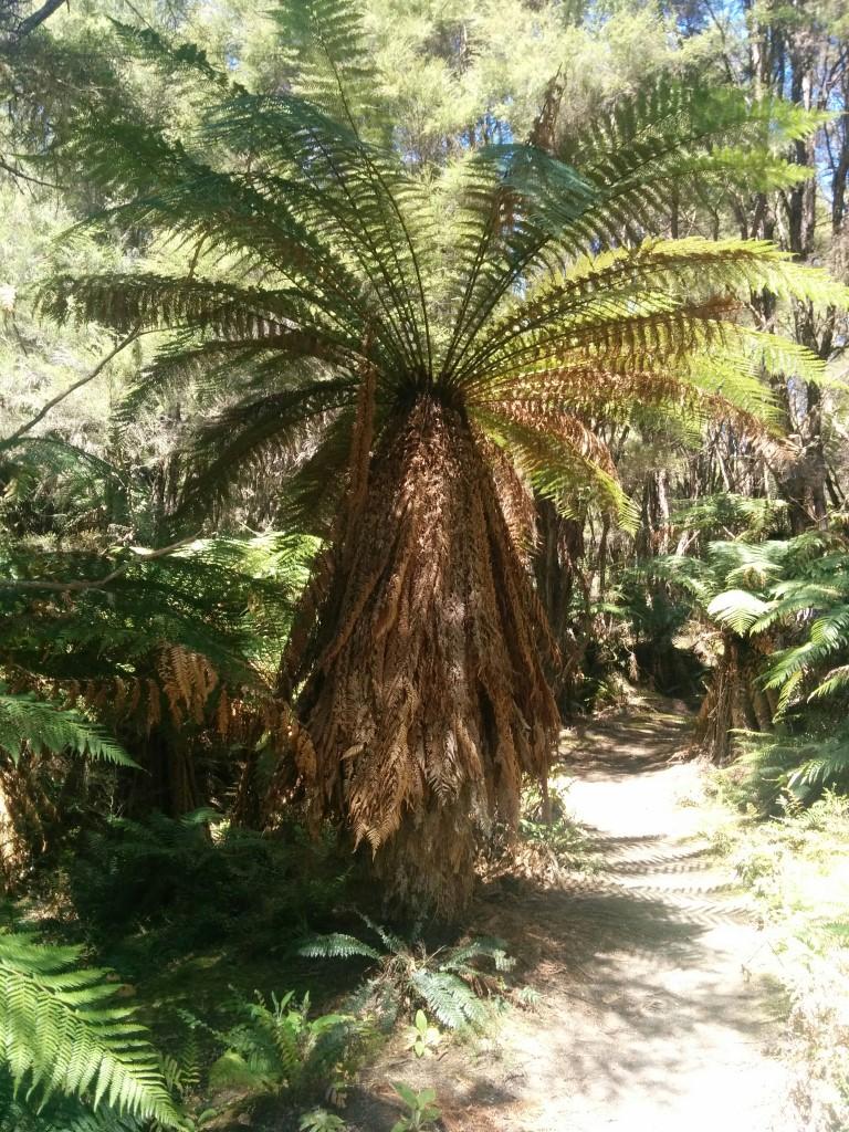 Ich weiß nicht warum, aber irgendwie finde ich diese Palmen jedes mal wieder toll...