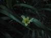 Ohhh, plötzlich überall diese Blumen. Toll!