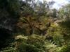 Direkt vor der Höhle hörte man massenweise Vögel und Bienen/Wespen.