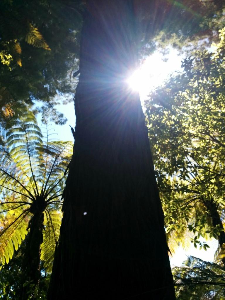 Ein paar Redwoods und der sonstige Dschungel stehen hier auch rum. Irgendwie gefällt mir das Motiv, es ist so lebendig.