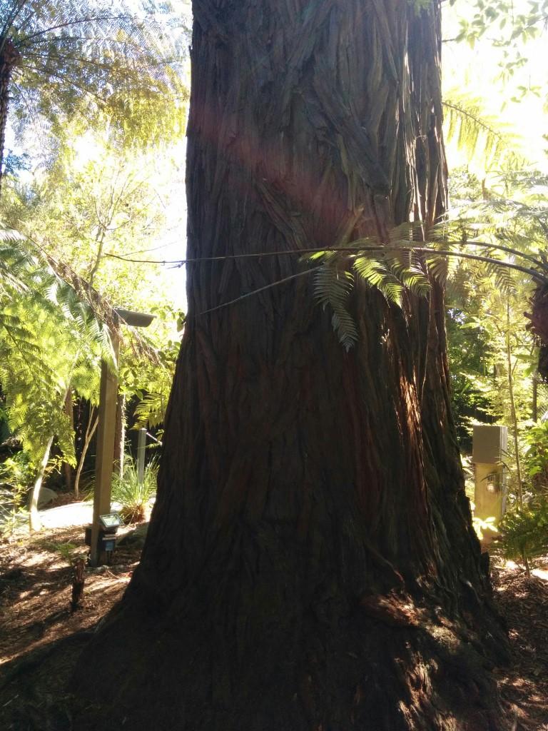 Der Redwood hat eine interessante Struktur.