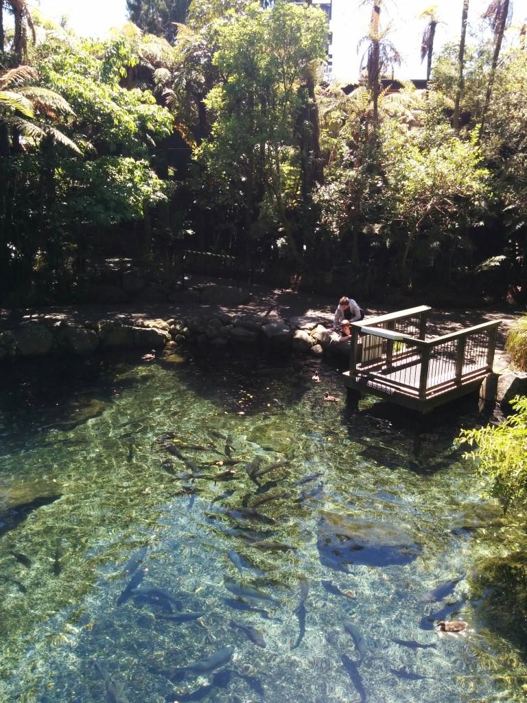 Diesmal sieht man auch die Fische im Teich vom ersten Foto!