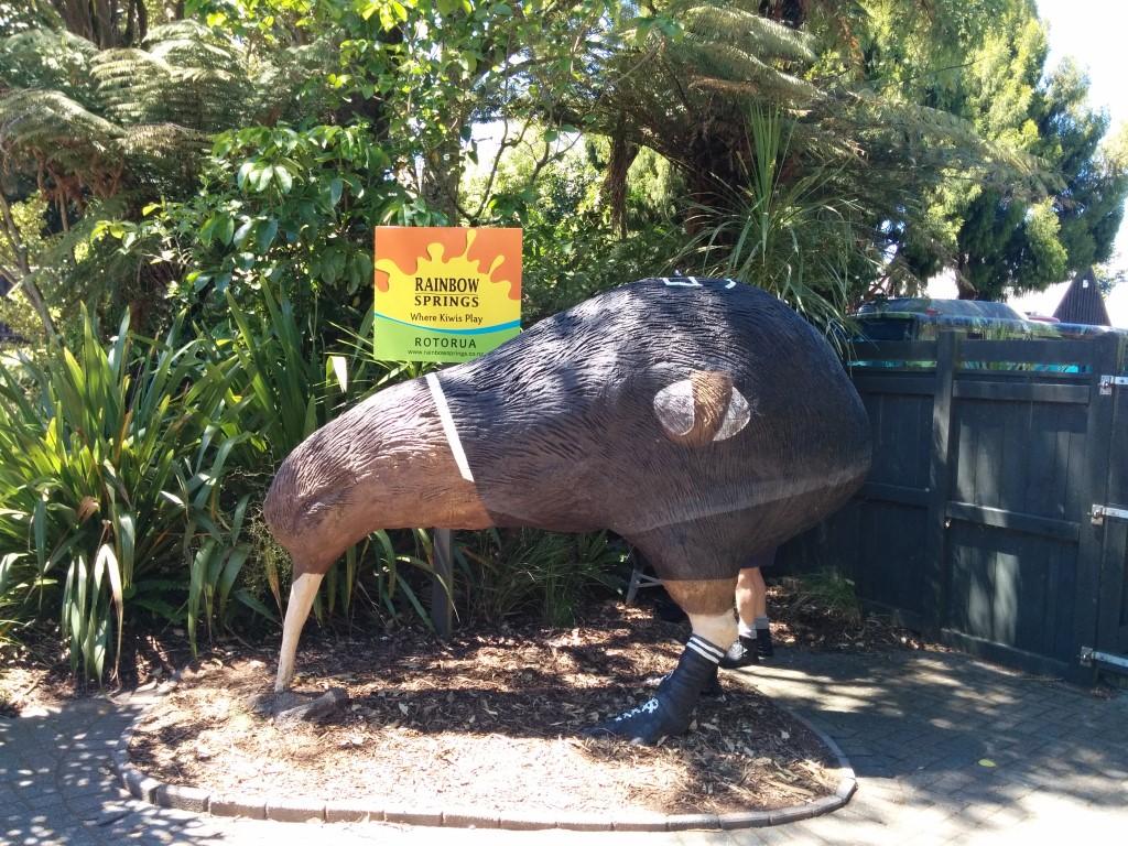 Hahaha, ein Rugby-Kiwi!