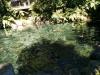 Ankunft in Rainbow Springs: Seen, Enten und FIsche.