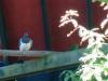 Zwei Vertreter der Vogelgattung, der grüne war etwas Fotoscheu und ist immer weggehüpft wenn ich ihn gerade fotografieren wollte.