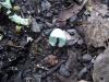 Immer wieder liegen diese winzig kleinen Eierschalen auf dem Boden. Zu welchen Vögeln die wohl gehören?