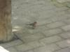 Auch hier verstecken sich Vögelchen, die einfach total doof-zutraulich sind.