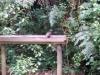 Mittlerweile bin ich bei der Vogelfütterstelle angekommen. Immerhin konnte ich einen Vogel beim Trinken beobachten.