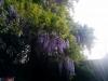 Schöne Bäume beim Minigolf!