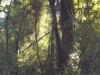 Auch in diesem Panoramabild sieht man, wie schön urwaldig es hier ist.