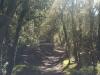 Interessante Pflanzenwelt. Sehr viel Moos. Und sehr viele Bäume, Sträucher und Farne. Vielfältiges grün!