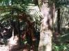 Panorama über den ganzen Dschungel