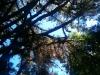 Und überall Nadelbäume!