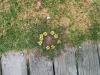 Im Kreis gewachsene Blumen?!