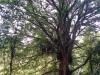 Die Pflanzen, die auf dem Baum sitzen :D