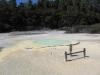 Der Austern-Pool :D