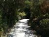 Die letzten Meter vor dem Ende führen nochmal durch idyllisches Grün