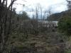 Und plötzlich überall tote Bäume!?