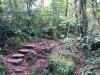 Kleine Steinstufen führen tiefer in den Wald hinein...