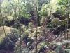 Auch wenn der Wald letztendlich aussieht wie die meisten die ich in letzter Zeit besucht habe, fasziniert mich der große Steinbrockenanteil.
