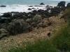 Eine Seelöwenkolonie!!!