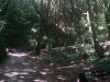 Endlich wieder ein Bush-Walk ;)