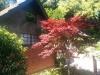 Und dieser Baum erinnert mich an Anja, als wir im Zoo waren!