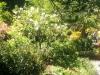 ... sehr riesigen botanischen Garten.
