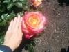 Alter, wie riesig sind denn bitte diese Blüten?!