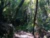 Wald, überall Wald.