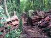Auch hier werden umgefallene Bäume nicht vom Weg entfernt, der Weg wird einfach aus dem Baum geschnitten.